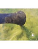 Embout spécial pour algues filamenteuses