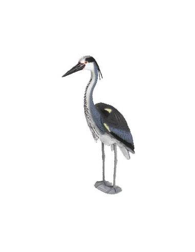 Heron cendré Oase