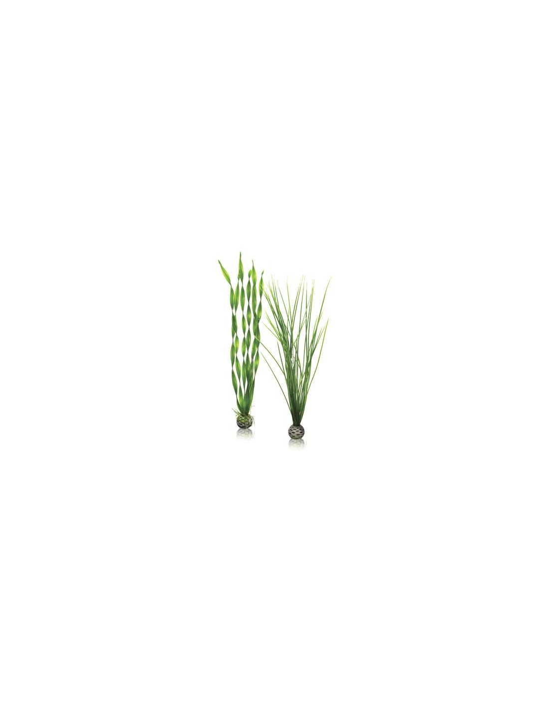 Biorb set de grandes plantes vertes oase for Grandes plantes vertes