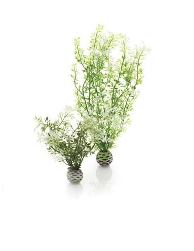 Biorb set de 2 plantes hivernales Oase