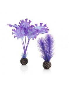 Biorb petit set de plantes violettes Oase