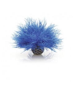 Biorb lys de mer bleu Oase