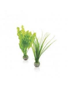 Biorb Petit set de plantes vertes Oase