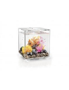 Aquarium biOrb Cube 30 MCR  transparent