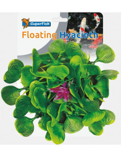Jacinthe Flottante Pond deco Colombo